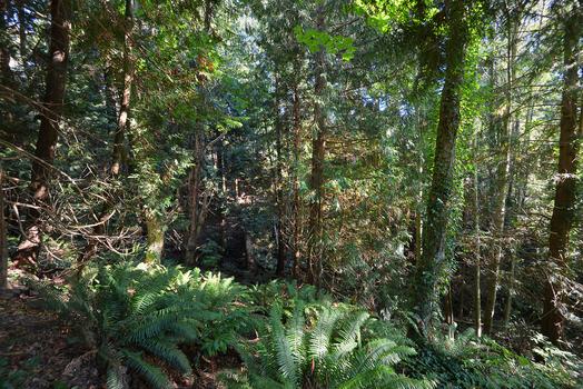dsc_8994 at 2590 Sylvan Drive, Roberts Creek, Sunshine Coast