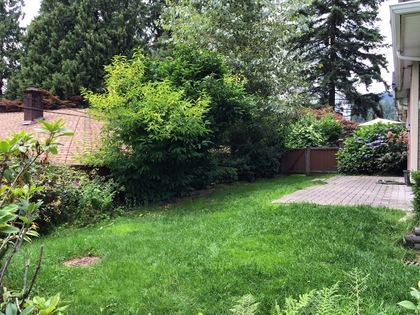 Yard at 1 - 239 Guilford Drive, North Shore Pt Moody, Port Moody