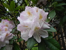 RHODODENDRON, BRIAN RHYS at 1862 Purcell Way, Lynnmour, North Vancouver