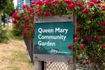 309 West Keith community garden at 309 West Keith, Lower Lonsdale, North Vancouver