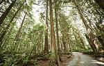 north-vancouver-forest-trail at 12 - 433 Seymour River Place, Dollarton, North Vancouver