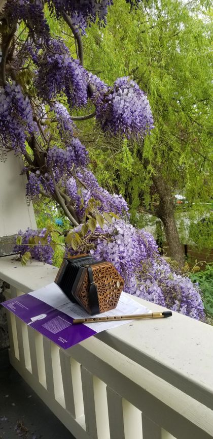 wisteria-concertina at 865 West 18th Avenue, Cambie, Vancouver West