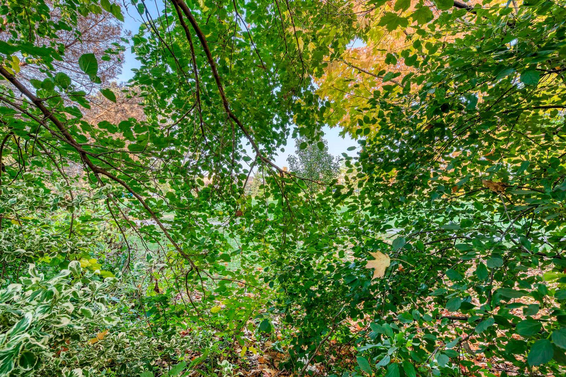 Summer - 2447 Stefi Trail, Oakville - Elite3 & Team at 2447 Stefi Trail, River Oaks, Oakville