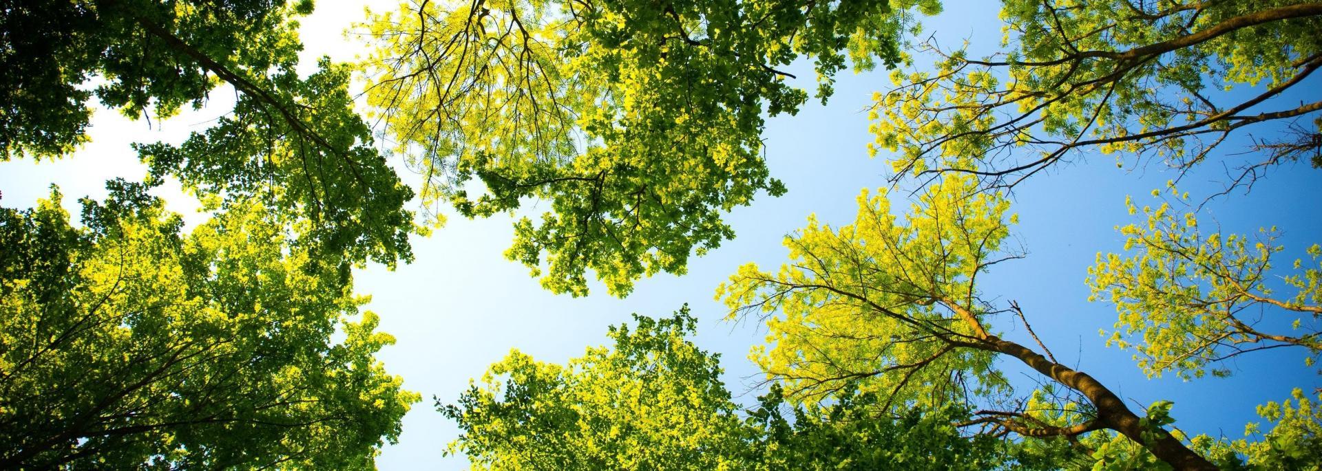 Spruce Grove 2