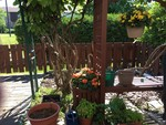 486-summer-garden1 at 486 Sandhamn Private Private, Hunt Club/Greenboro, Ottawa