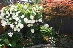 Summer Garden at 4 Barnaby Pvt, Overbrook, Ottawa