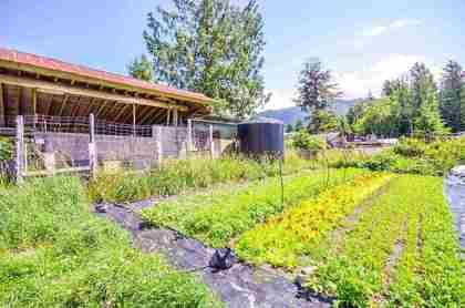 1211-parkwood-place-brackendale-squamish-14 at 1211 Parkwood Place, Brackendale, Squamish