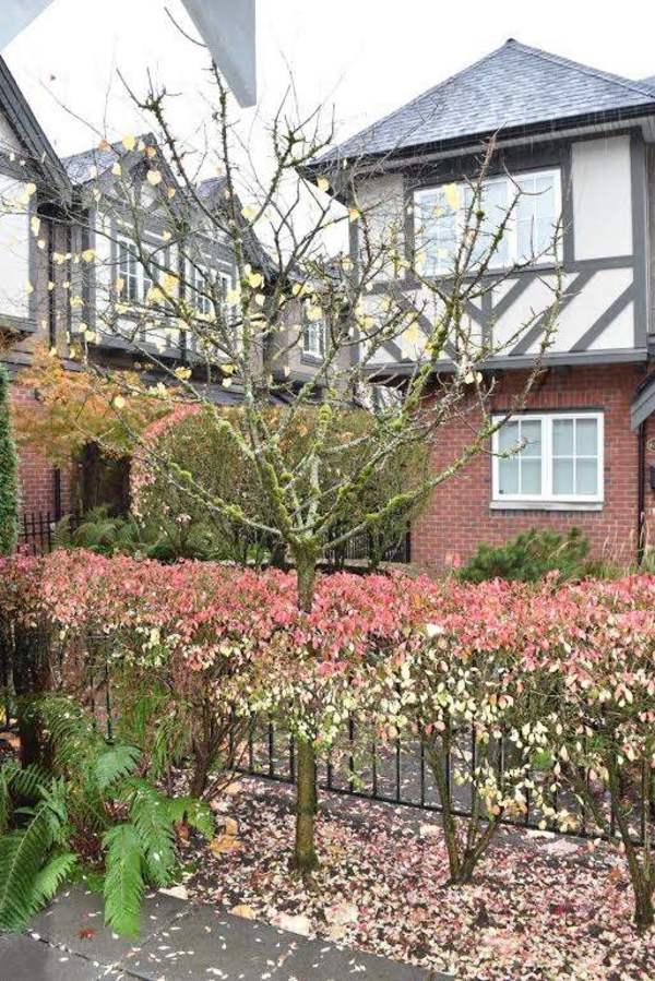 10.jpg at 6189 Oak Street, South Granville, Vancouver West