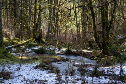 715-lorimer-road-western-highlands-highlands-13 at 715 Lorimer Road, Western Highlands, Highlands