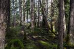 715-lorimer-road-western-highlands-highlands-22 at 715 Lorimer Road, Western Highlands, Highlands
