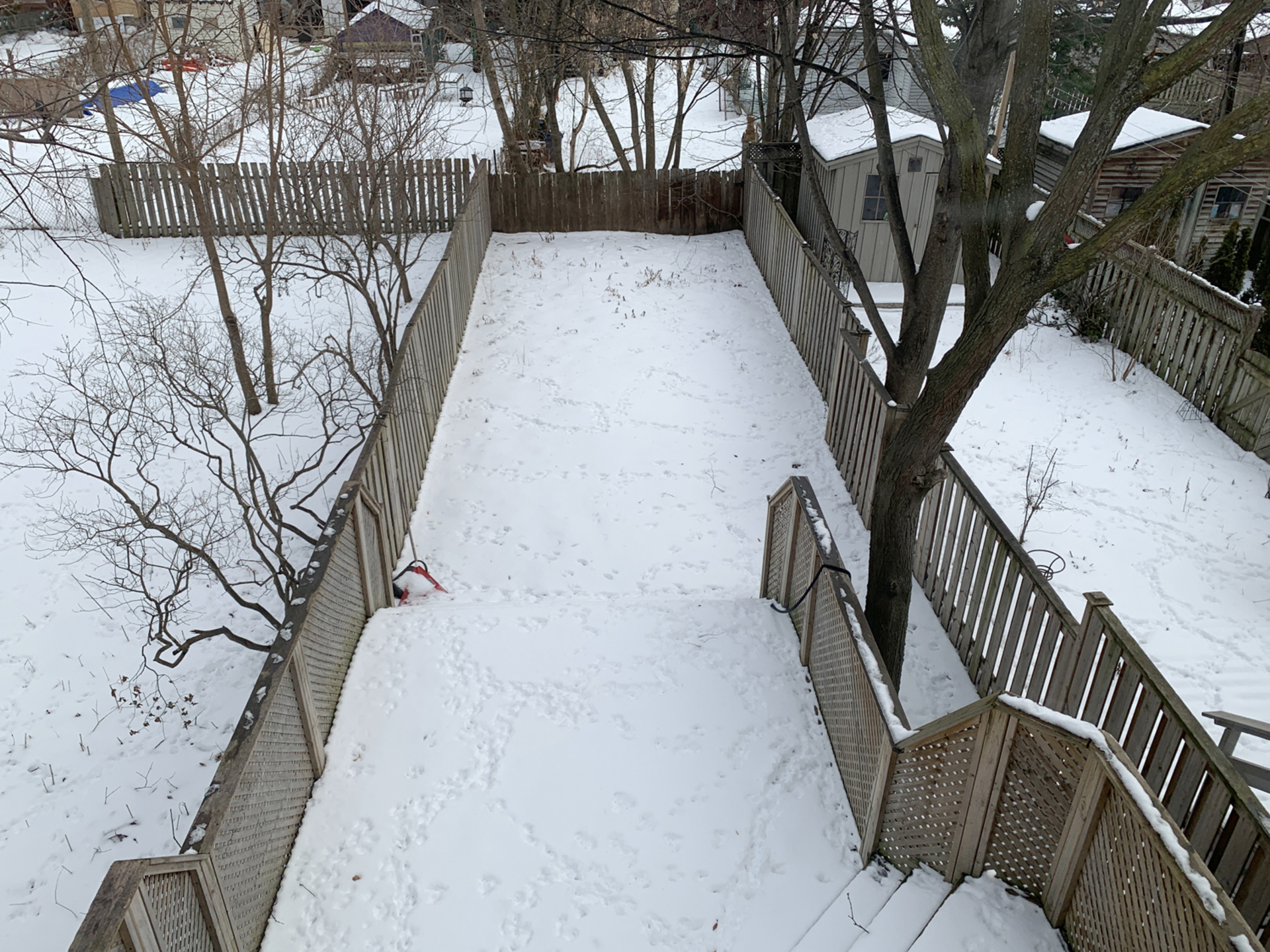 Backyard at 11A Laws Street, Junction Area, Toronto