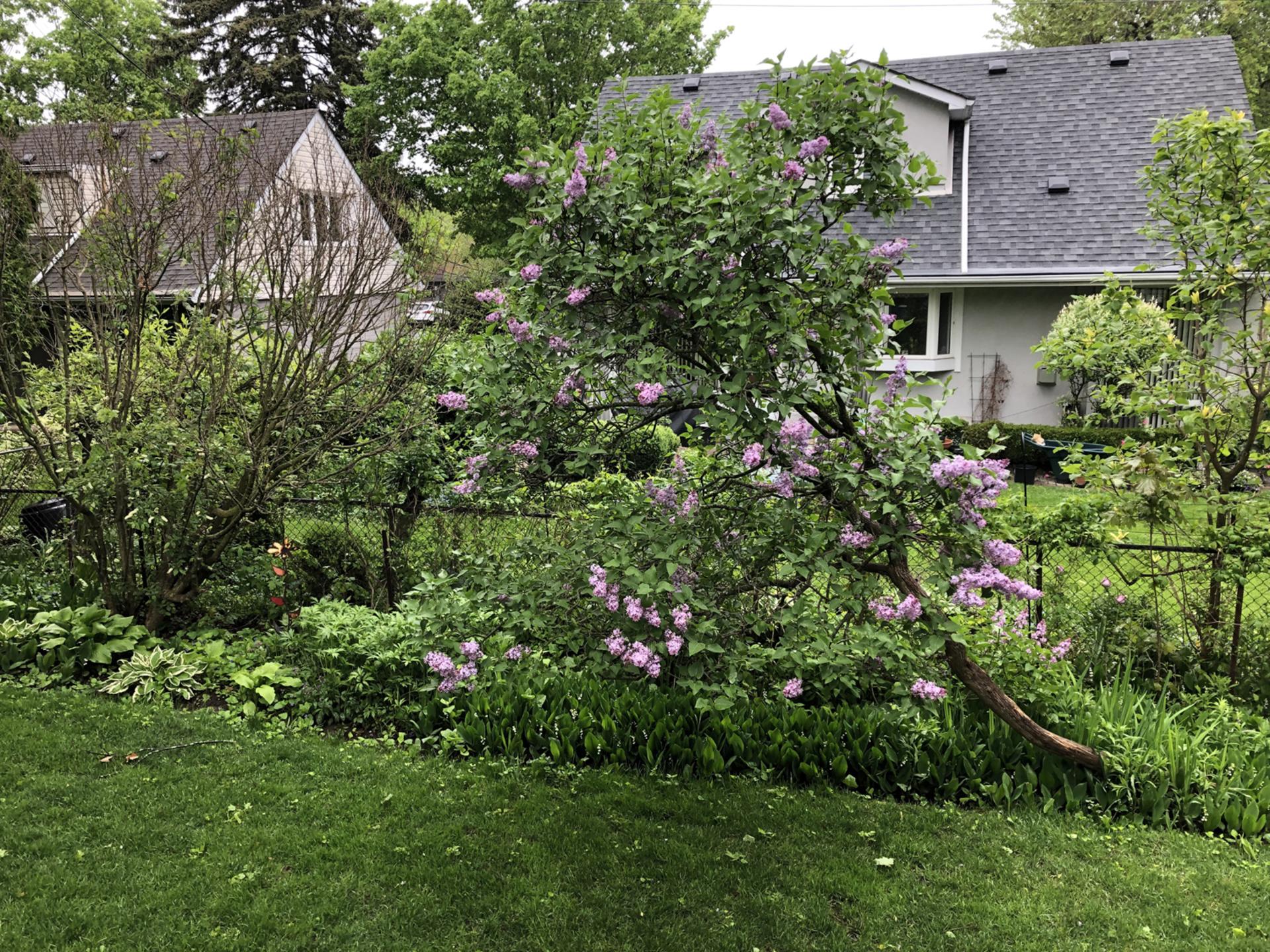 Backyard at 10 North Hills Terrace, Banbury-Don Mills, Toronto