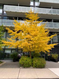 Front Entrance at TH6 - 25 Stafford Street, Niagara, Toronto