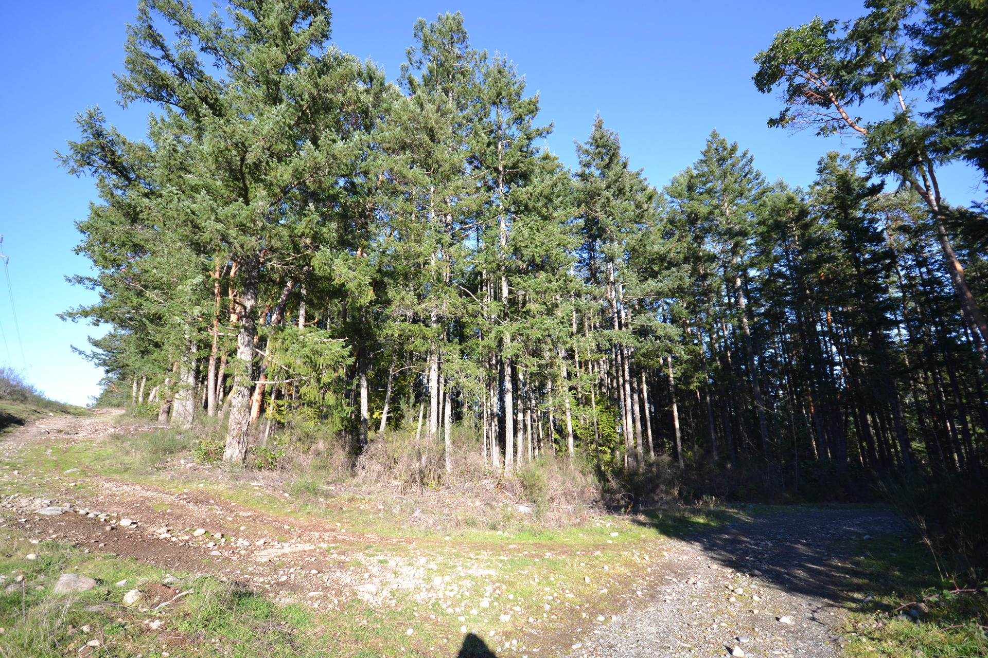 Nearby Trails at Lot A Malone Road, Ladysmith, Vancouver Island