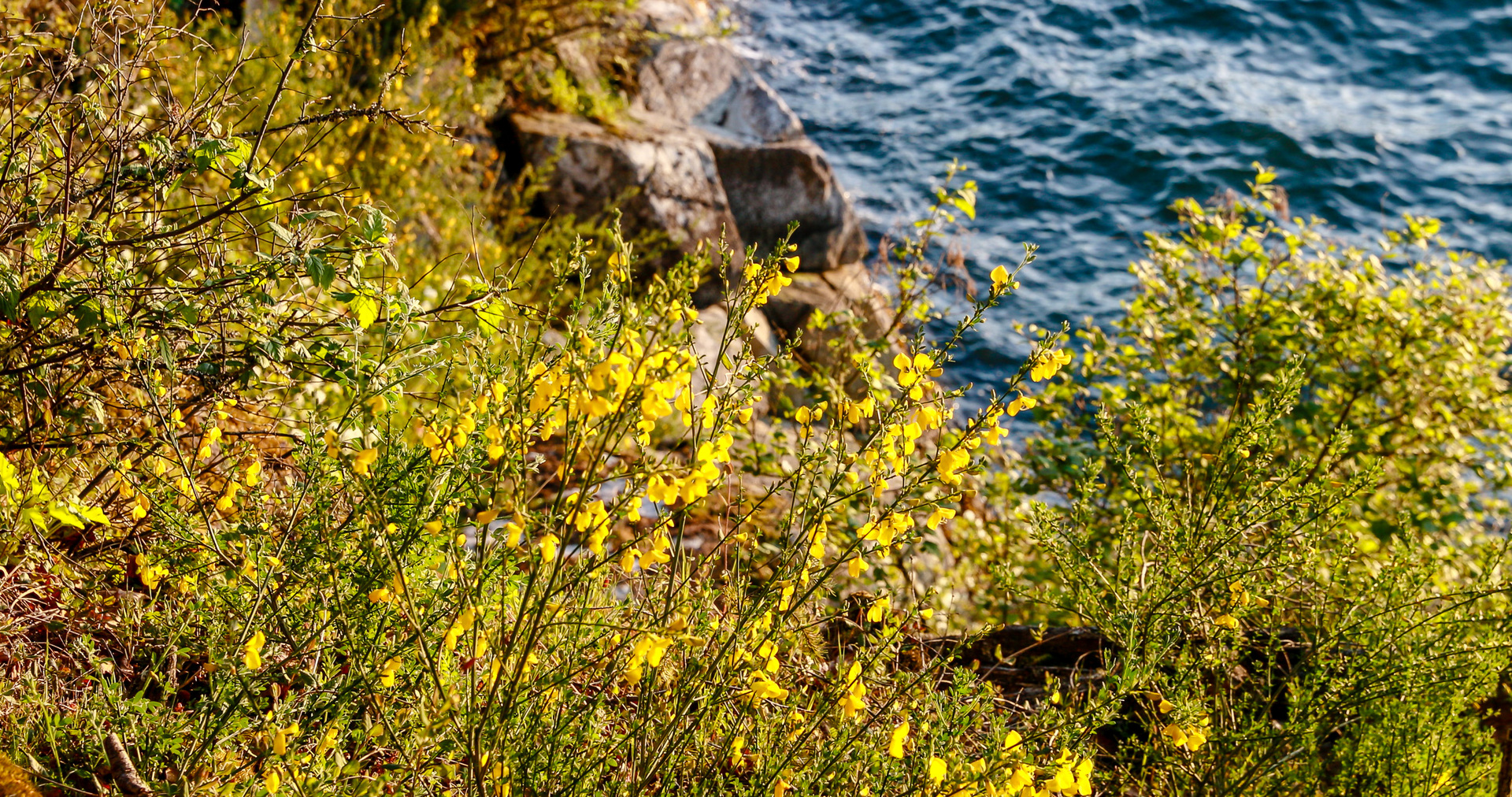 Seaside Flora at 8100 Mcphail Road, Inlet, Central Saanich