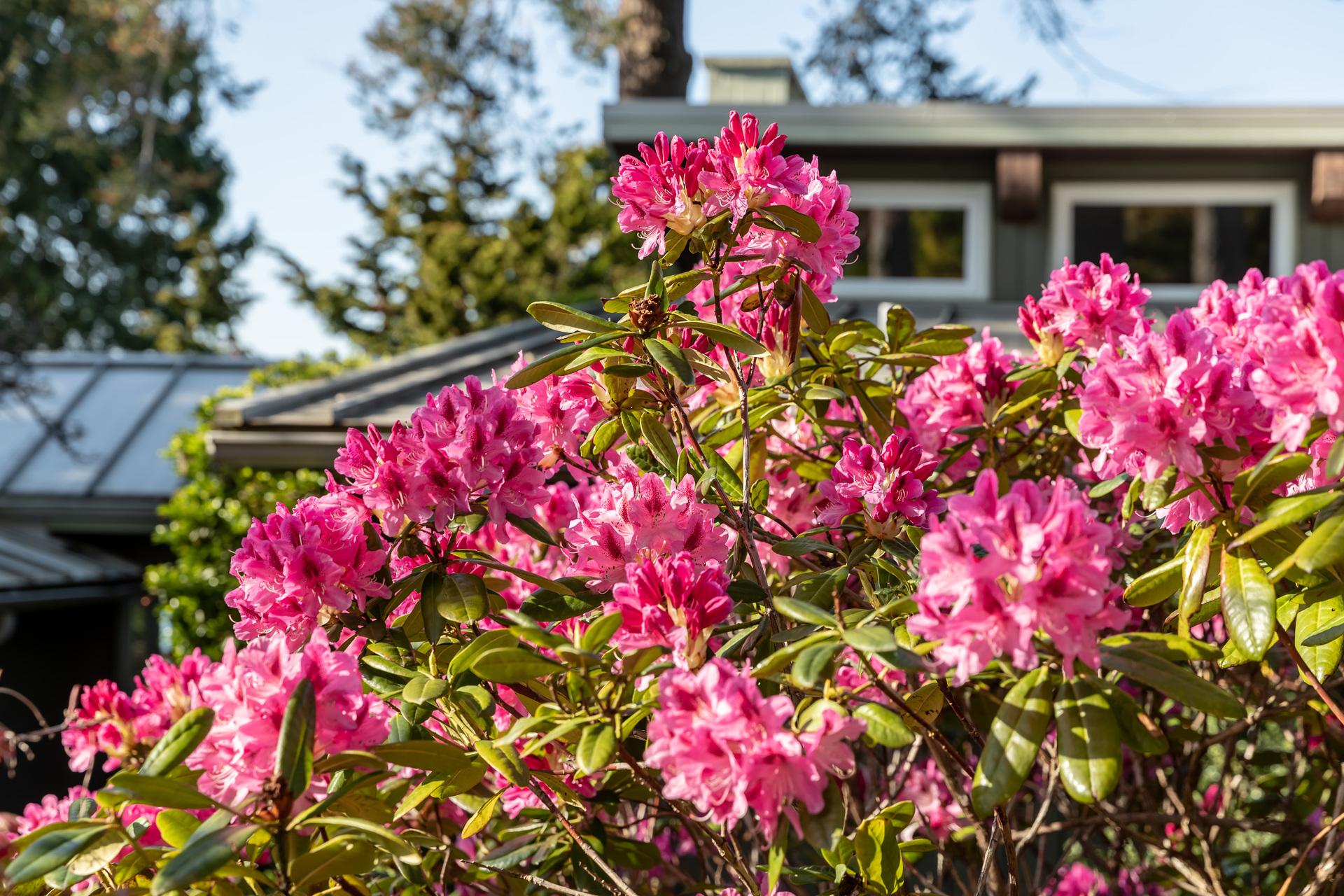 Easy Maintenance Gardens at 4855 Major Road, Cordova Bay, Saanich East