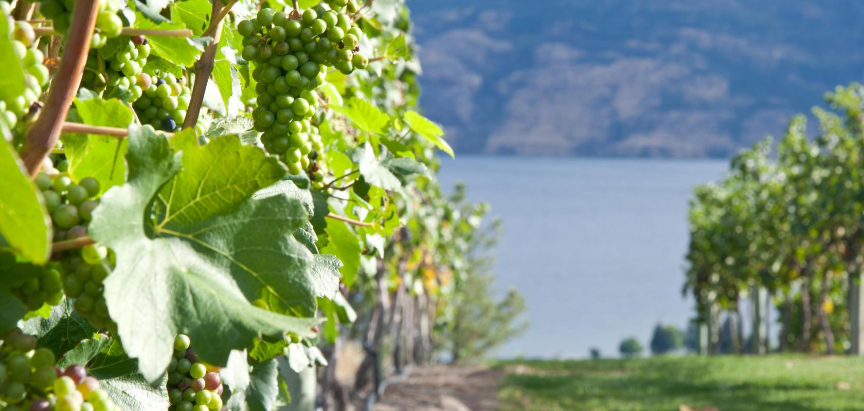 Find a home in Okanagan
