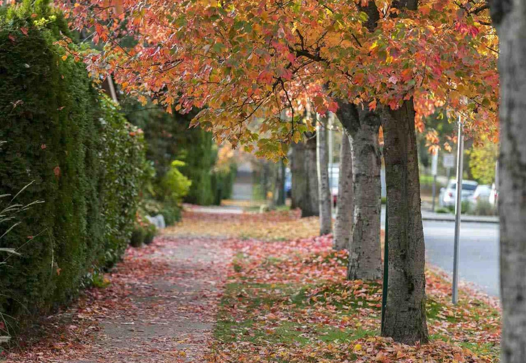 Kerrisdale (Vancouver Westside)