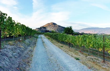 vineyard-driveway at 8708 Belvedere Place,