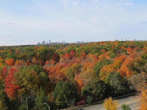 1141615-1105-leslie-street-large-048-066-fall-view-1000x750-72dpi at 1105 Leslie Street, Banbury-Don Mills, Toronto