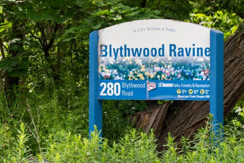178-sheldrake-blvd-print-085-009-blythwood-ravine-3255x2170-300dpi at 178 Sheldrake Boulevard, Mount Pleasant East, Toronto