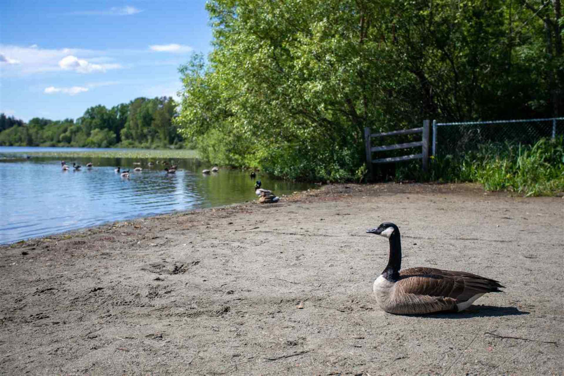 6036-brantford-avenue-upper-deer-lake-burnaby-south-14 at 6036 Brantford Avenue, Upper Deer Lake, Burnaby South