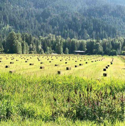 390-dill-road-pemberton-meadows-pemberton-20 at 390 Dill Road, Pemberton Meadows, Pemberton